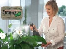 Опрыскивание тепличных растений раствором дегтярного мыла от белокрылки