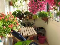 Озеленение закрытого балкона