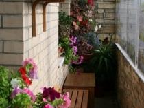 В дизайне балкона использовано озеленение