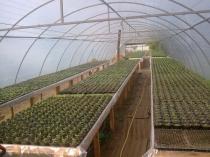 Оборудование теплицы деревянными стеллажами для растений