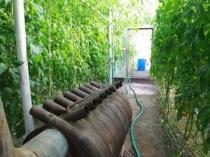 Печь Bullerjan в теплице для обогрева растений