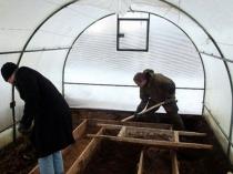 Вскапывание почвы в теплице перед зимними холодами