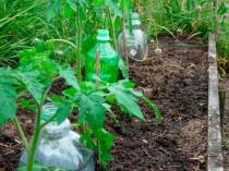 Полив растений в теплице при помощи пластиковых бутылок