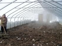 Подготовка грунта телицы к зиме