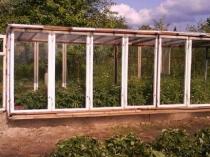 Теплица из оконных рам с плоской крышей на даче