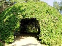 Беседка-шалаш увитая виноградом