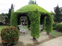 Опорные стойки и крыша беседки из винограда