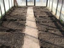 Очищенная от остатков растений земля в теплице