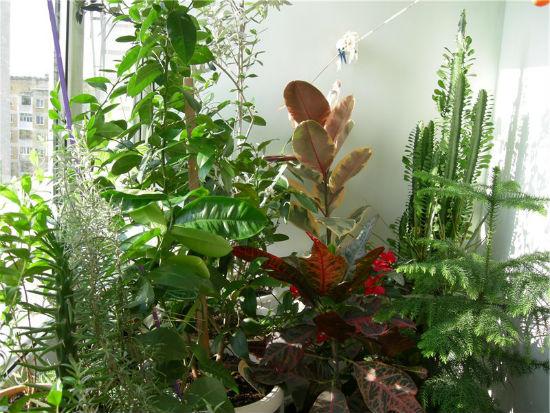 Выбор растений для зимнего сада