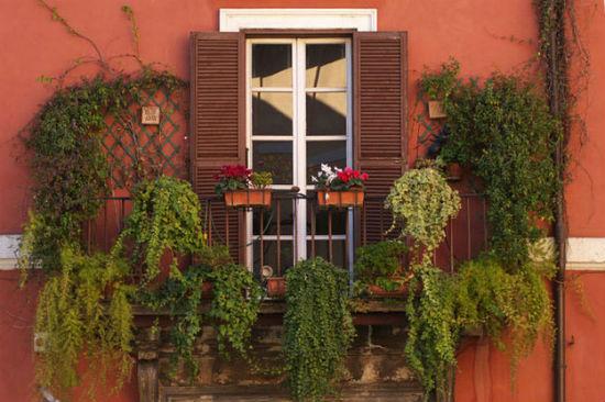 Ампельные растения для балкона