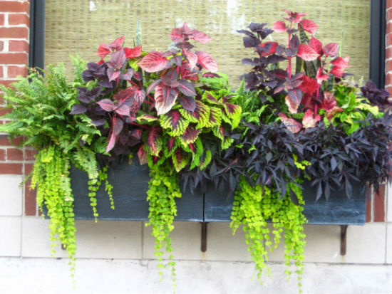 Ящики для цветов на открытом балконе