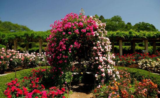 Цветочная беседка из роз