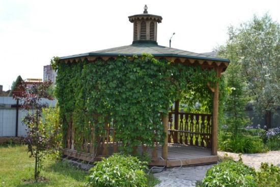 Многогранная беседка с виноградом