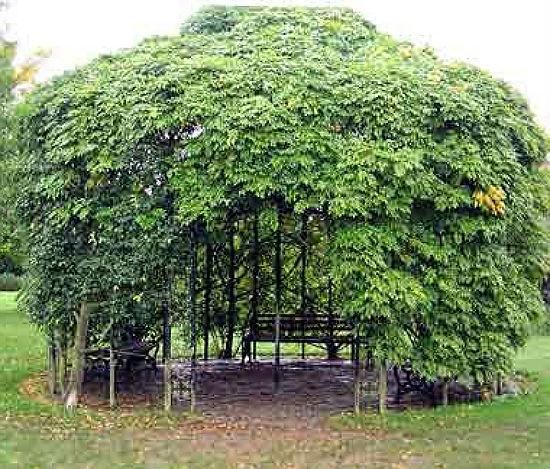 Беседка с зеленой крышей из листвы