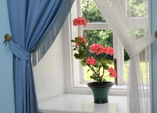 Цветущее растение на подоконнике в спальне