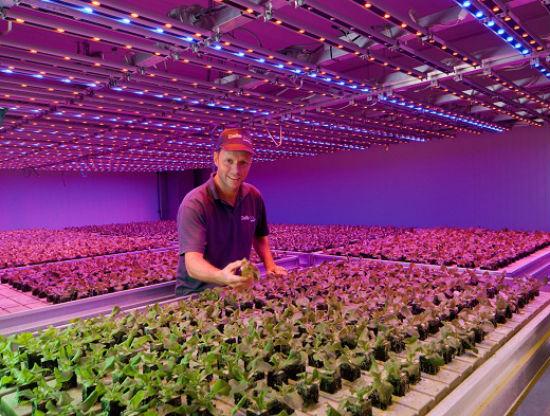 Диодное спектральное освещение растений в тееплиц