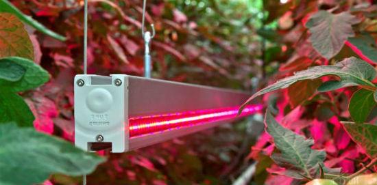 Способ расположения лампы в системе освещения теплицы