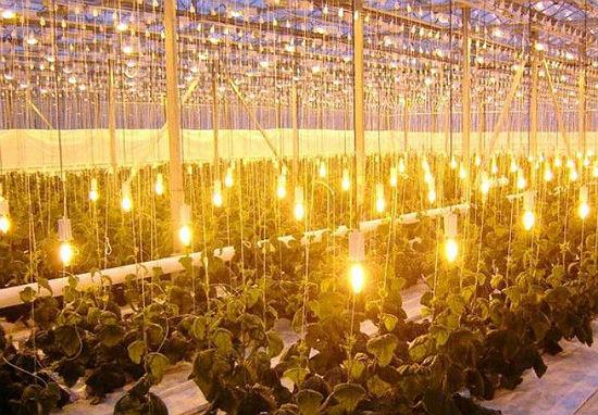 Вариант организации освещения в теплице посредством ртутных ламп