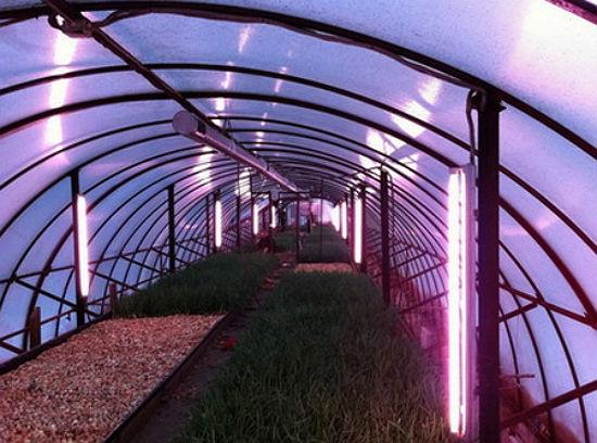 Устройство освещения теплицы ультрафиолетовыми лампами