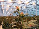 Система потолочного освещения в большой теплице